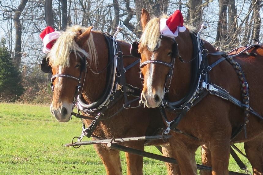 driving horse christmas.jpg